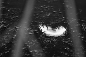 A small white feather on a black floor